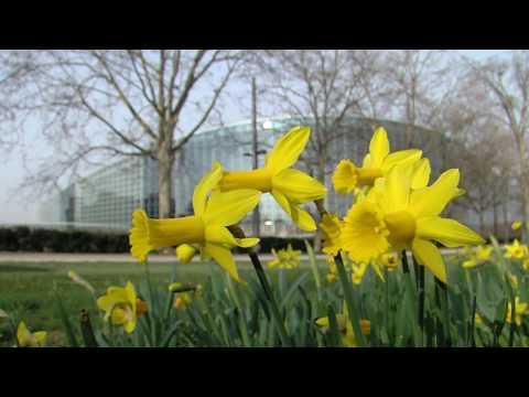 Julie Girling MEP video blog March 2017