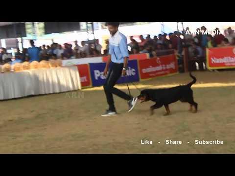 Thrissur Dog Show 2018 - Rottweiler Specialty Show