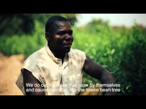 Roots of Recovery. Trees, People and Regeneration of the Sahel.