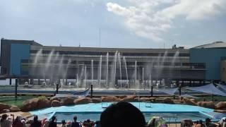 """Manila Ocean Park Fountain Show """"My heart will go on"""""""