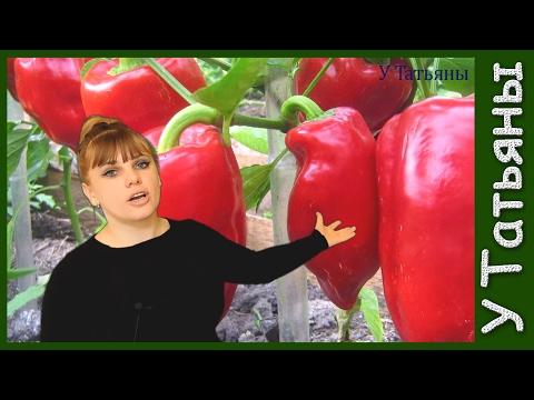 Проверенный способ выращивания рассады ПЕРЦА болгарского сладкого. Посев семян перца на рассаду.из YouTube · Длительность: 3 мин1 с