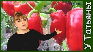 видео Как вырастить рассаду перца