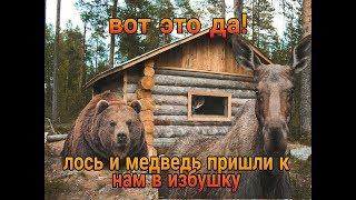 Вот это да лось и медведь пришли к нам в избушку.