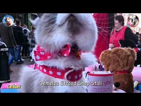 Oliver The Ragdoll Cat for Demelza at Sweep Festival 30.04.16