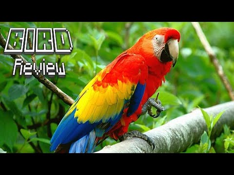 Bird review #12 [Parrot]