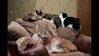 Дикие домашние животные
