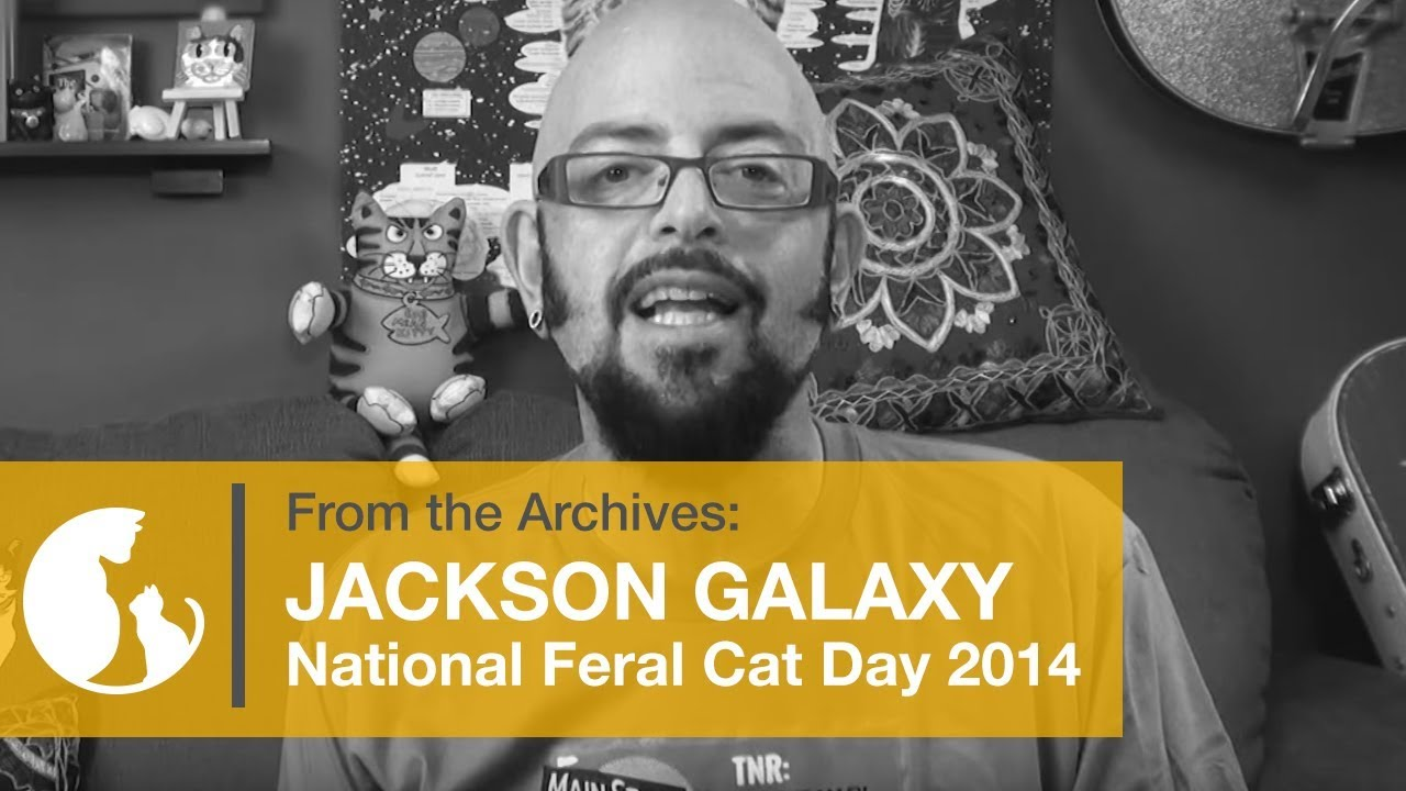 Jackson galaxy national feral cat day 2014 tnr from for Jackson galaxy images