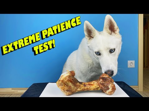 TESTING MY DOGS PATIENCE!
