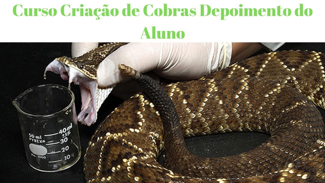 Curso Criação de Cobras Depoimento do Aluno