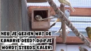 Vogels op nesten
