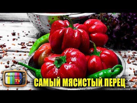 СОРТ СЛАДКОГО ПЕРЦА РАТУНДА САМЫЙ МЯСИСТЫЙ ИЗ ПЕРЦЕВ | болгарский | урожайный | урожайные | полезное | сладкий | огород | лучшие | сорта | самые | перцы