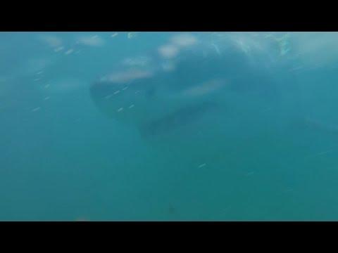 Meeting The Shark