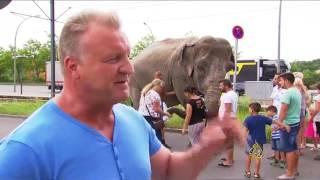 الفيلة مايا.. صديقة الأطفال تتجول بشوارع برلين