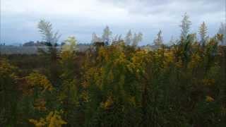 午後の散歩は定番の阿武隈川河川敷。