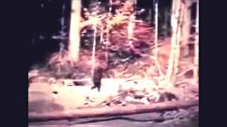 2017 Complete Patterson Bigfoot Film in HD Enhanced w/ Vegas Pro 14