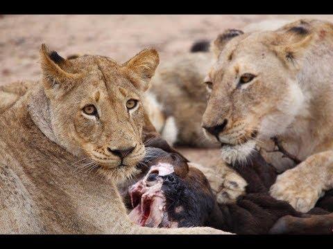 Wildlife Showreel