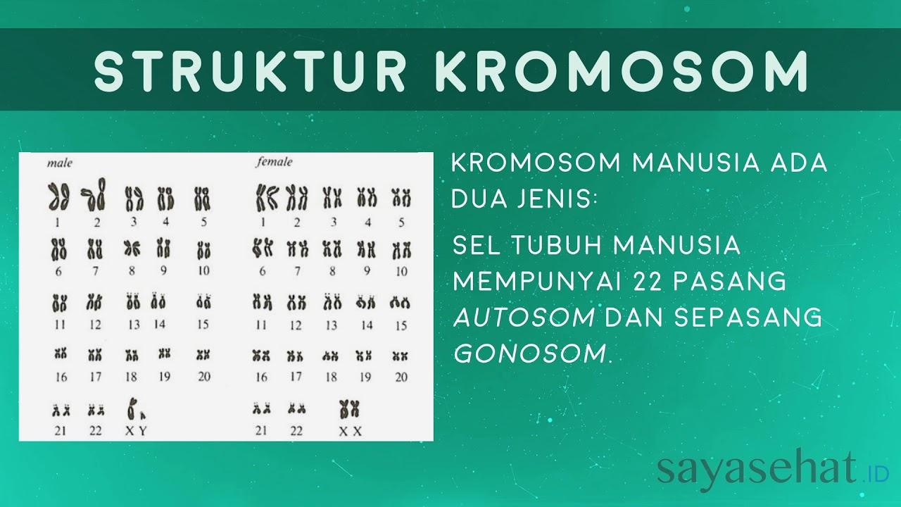 kromosom 17