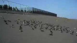 Doves 20070809 Takeoff & Landing