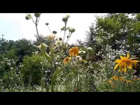 Hallym University Flower Garden