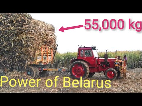 Power of 3 Belarus 510.1 Tractors| Power test full loaded 8 Wheeler trailer |55,000kg load sugarcane