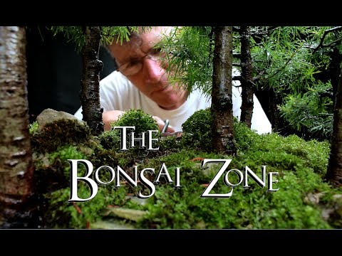 The Bonsai Zone, Larch Forest Update, July 2017