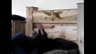 The Gun Bed at  (www.gunbed.net)