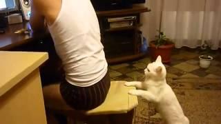 Белый кот кусает мальчика