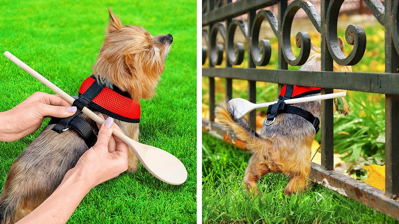 Download GENIUS HACKS AND GADGETS FOR PET OWNERS