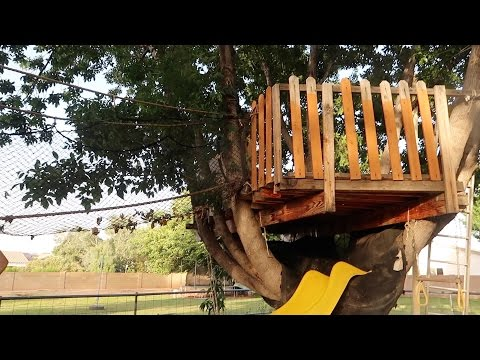 The Treehouse Renovation is overdue!