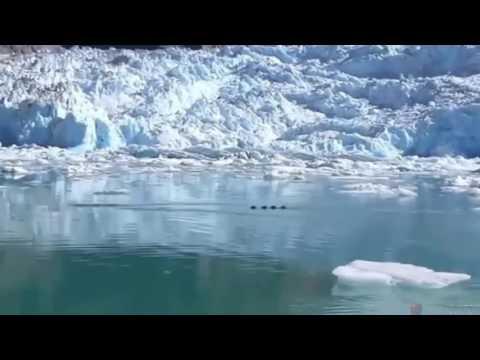 Gigantic Dragon Sea Monster Filmed By Tourists In Alaska