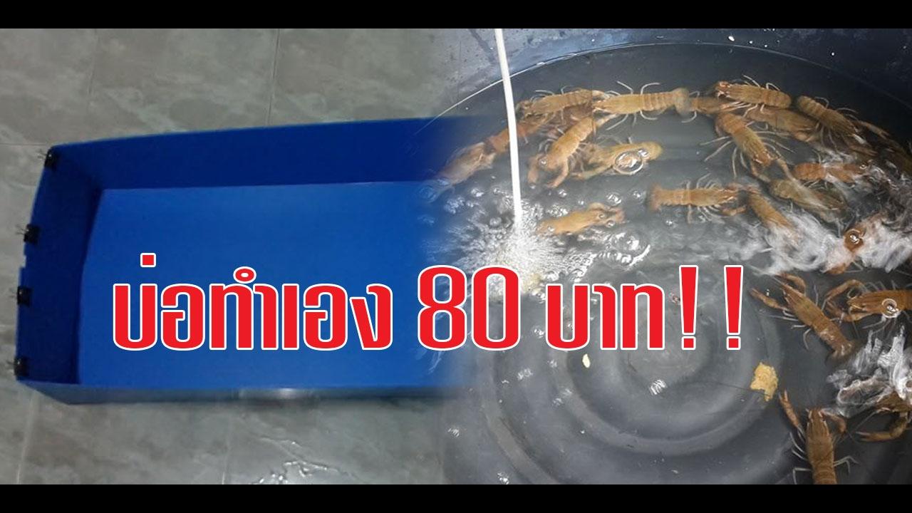 สอนทำบ่อเลี้ยงกุ้งก้ามแดง ง่ายๆ ราคา ไม่ถึง 100!! : How to Shrimp pond !!