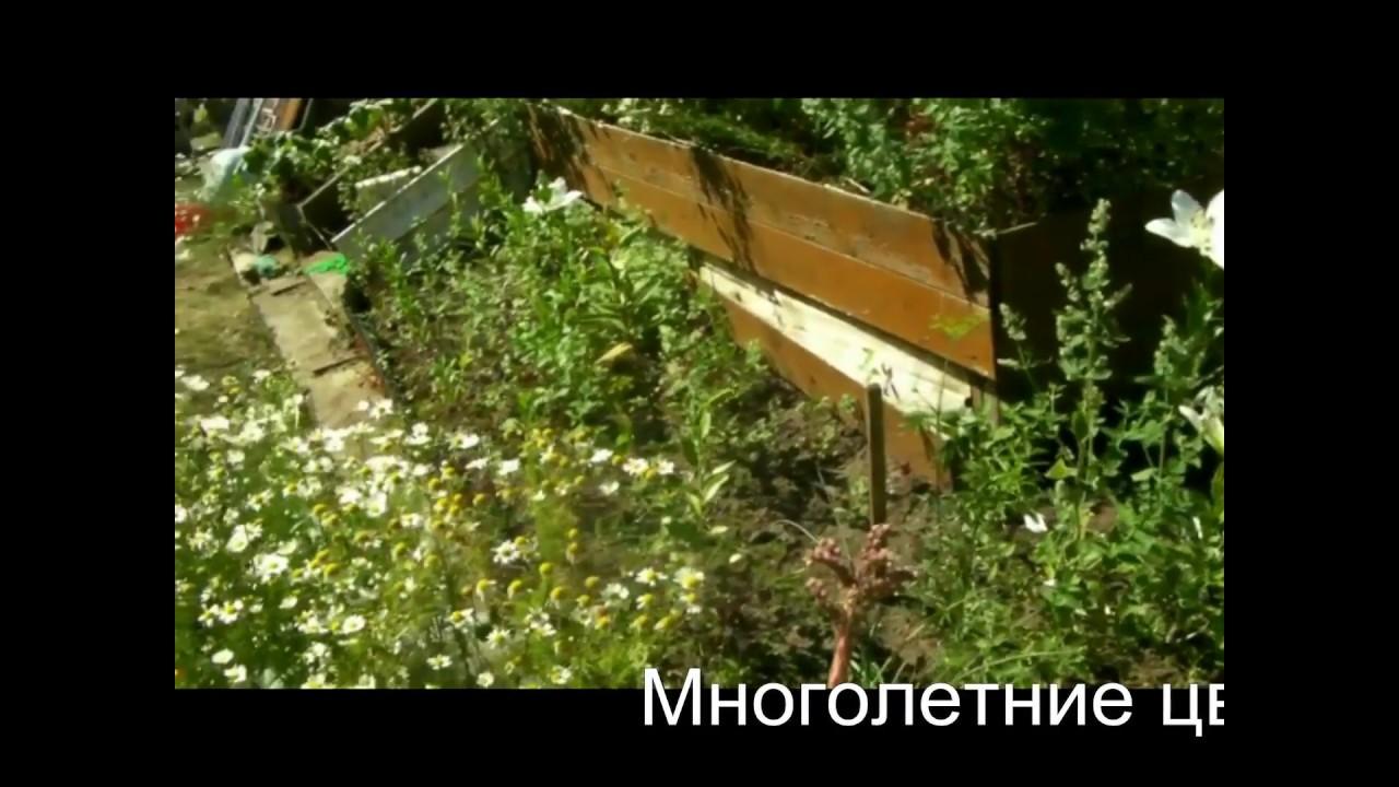 Мои любимые цветы на даче (многолетники), ч.1. - YouTube