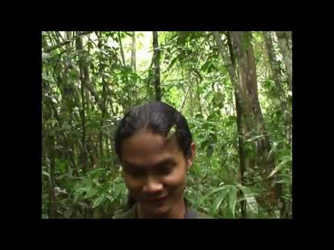 Thailand - Spinnen im Khao Sok Nationalpark