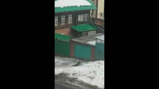 Стая бездомных собак на улице Партизанской.  Логово в сгоревшем доме. Ижевск. Удмуртия