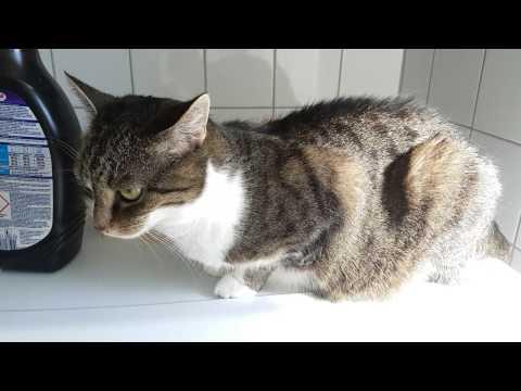Super cuddly Cat ASMR 1440p