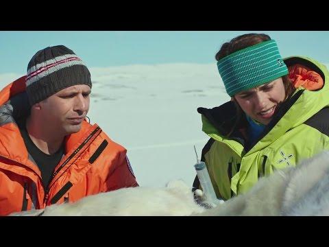 К черту на рога — Русский трейлер (2016)