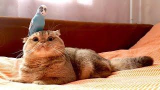 Попугай Кеша и кот Лаки =)