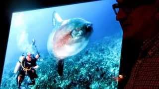 Китовая акула и Мола Мола, Алексей Зайцев, часть 5