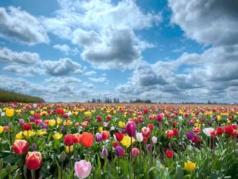 Campos de Flores - YouTube
