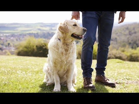 How Old Is My Dog? 5 Ways To Tell Your Dog's Age