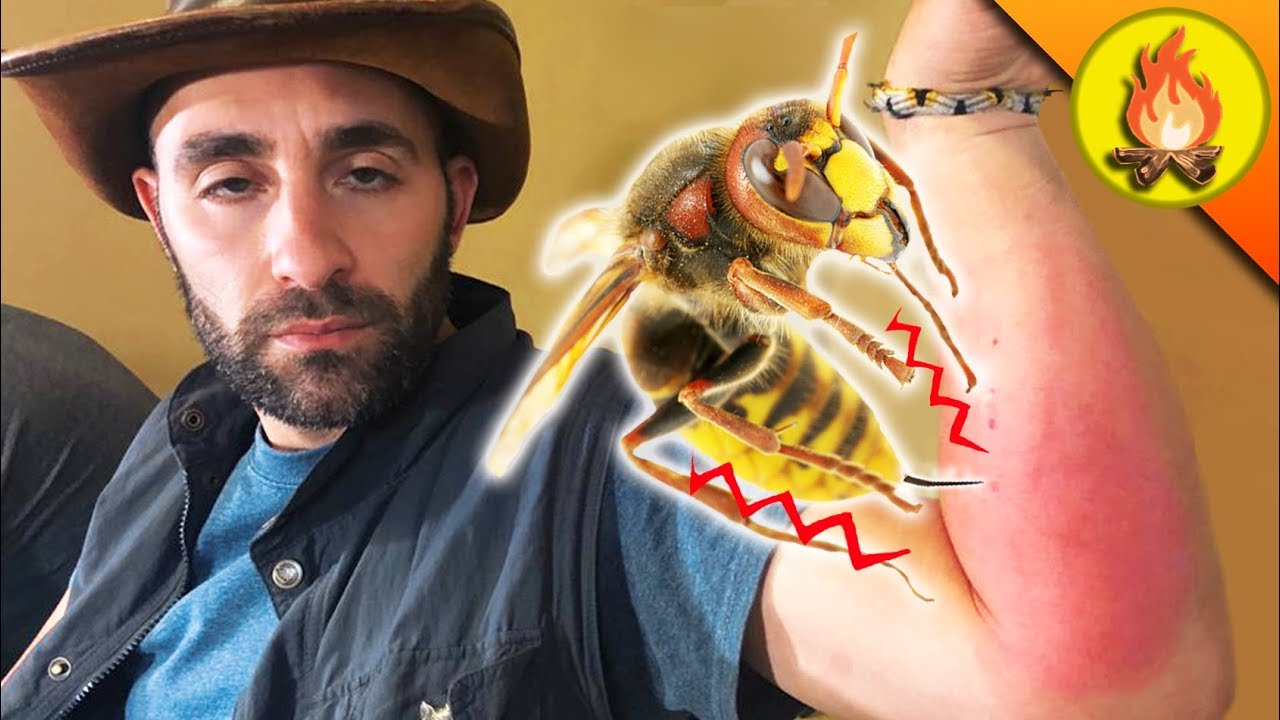 Beekeepers, researchers wait to see if 'murder hornets' will make it ...