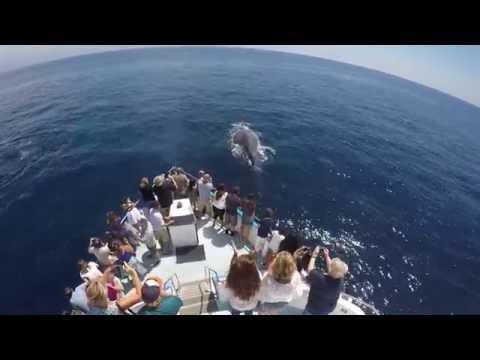 Newport Beach Whale Watching