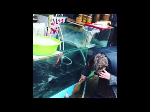 how to clean aquarium - incredible!!!