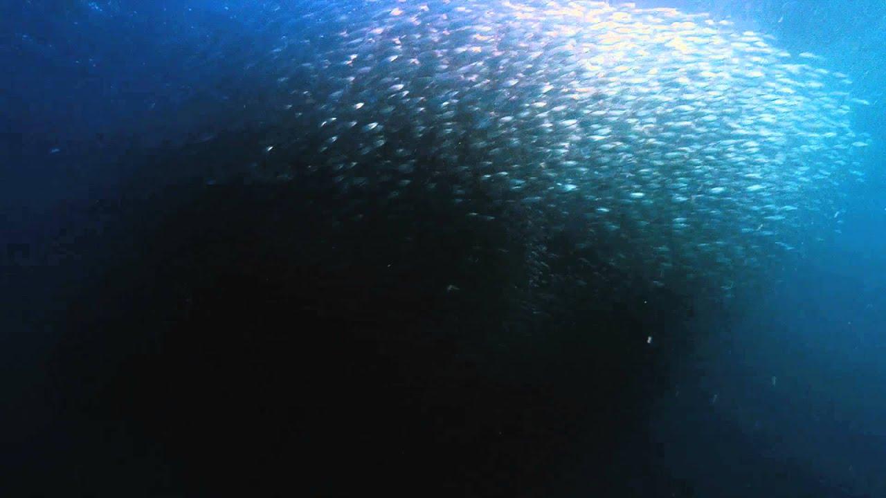 Download Wild Ocean - TRAILER [HD]