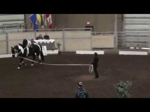 Living Skies   Alyssa Parker Mullen   Freestyle Round 2   Individual Canter D Women   2014 AEVASEVA