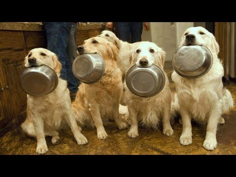 AMAZING ! Smart Dogs Wait For Their Names To Be Called  | Funny Pets Compilation