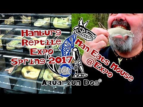 Aquarium Dog Hamburg Reptile Expo 2017, Man eats Mouse, Venemous Reptiles and More.