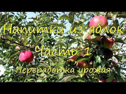 Напитки из яблок. Часть 1. Переработка урожая.