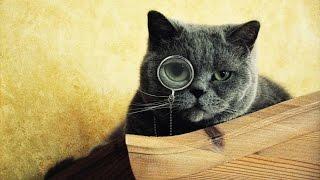 Создай своего котенка)