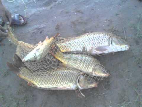 Fishing in pakistan Asif Shikari